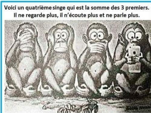 4 vrai singes.jpg
